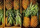 Как выбрать ананас спелый и сладкий в магазине. Сколько его хранить, чтобы не портился